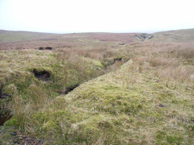 Moorland above Woldgill Burn