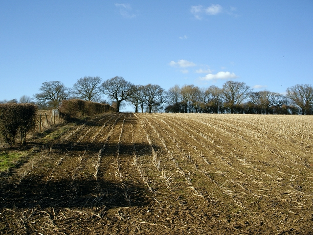Neat rows of stubble at Southstoke Farm