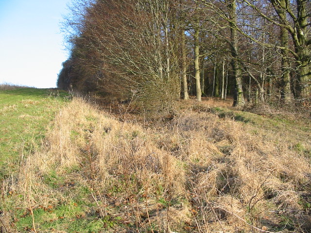 Grims ditch ancient earthwork.