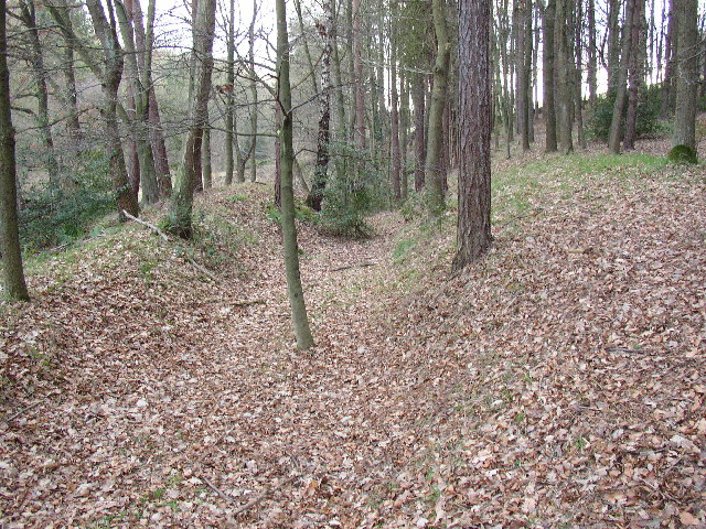Bank and ditch in Saville Wood, Thurstonland, Yorkshire