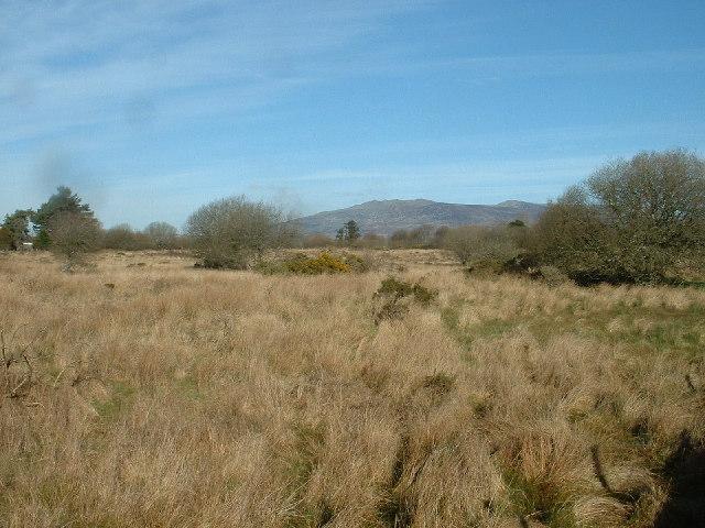 Not grazing fields.....