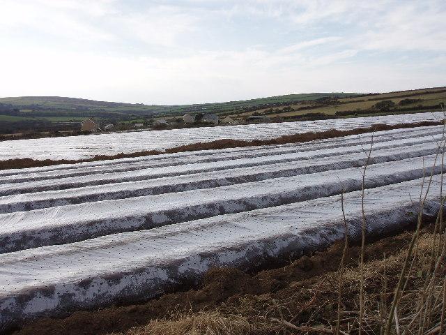 Potato fields near Newbridge