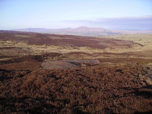 Cold Stone Plain