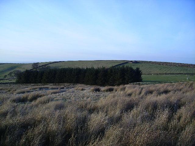 Plantation near Bank End
