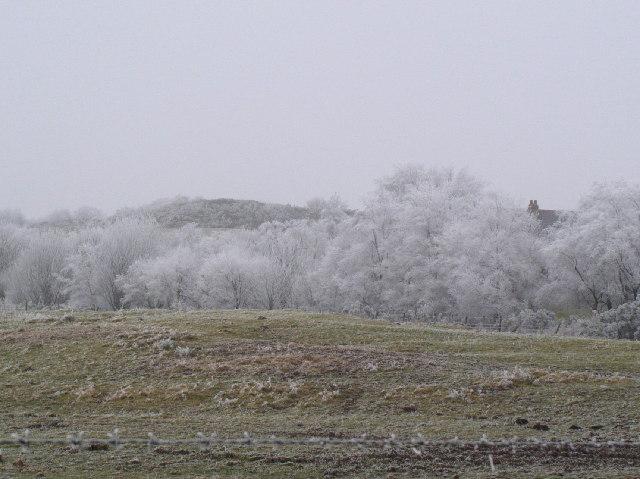 Frozen trees near Bwlchgwyn