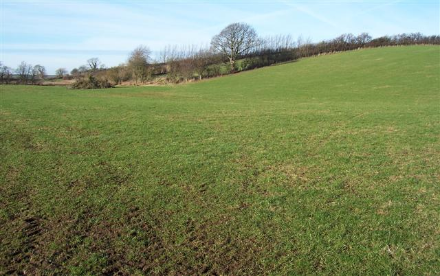 Field with a contour.