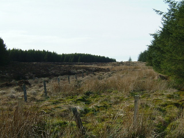 Junction of fences in forest firebreak