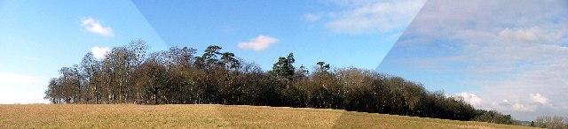 Pallett's Wood.