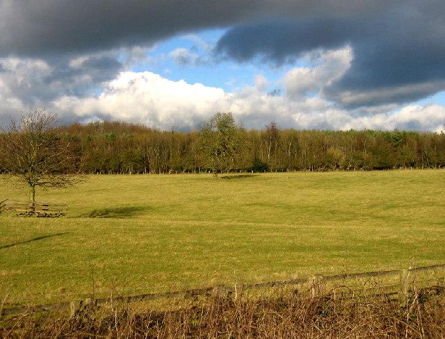 Polehill Wood, near Meldon Park