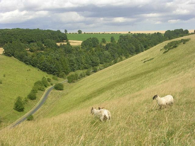 Pasture Dale