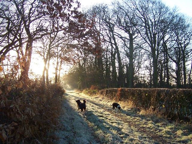 Lane Between Thingwall Road and Arrowe Brook Lane