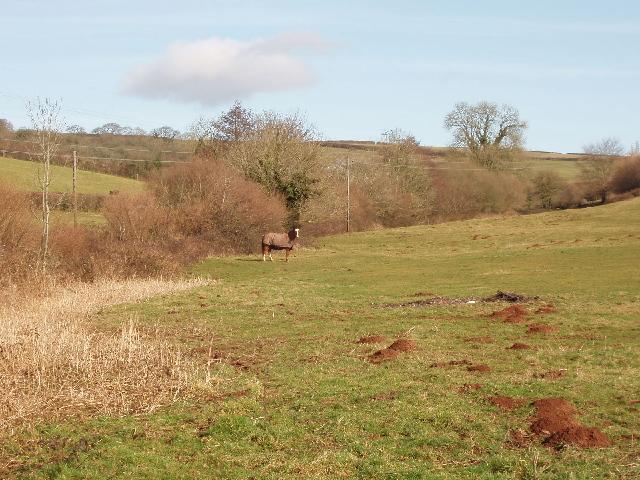 Horse in a field, Luton, Devon