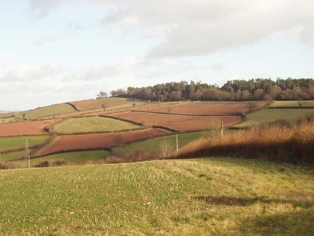 Fields of  Rixdale, near Luton, Devon
