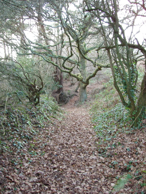 Footpath above Teignmouth