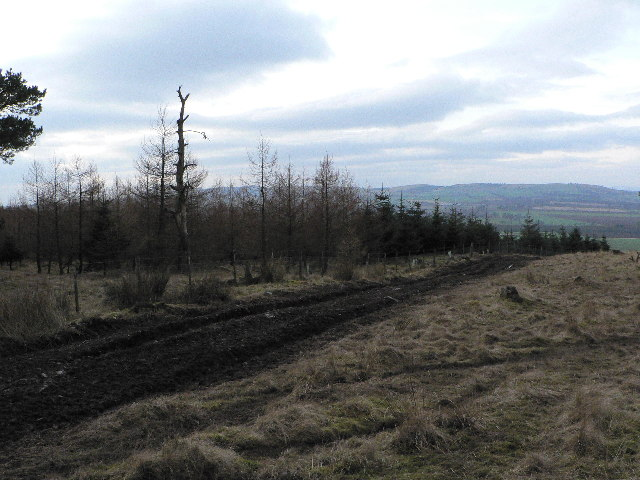 Track through Rough Moorland