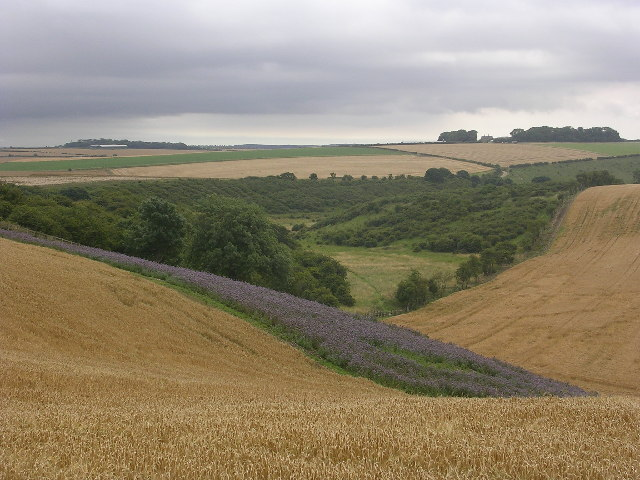 Wolds Way, Camp Dale