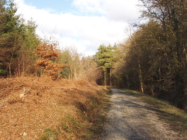 Zig-zag wood, Mamhead Forest