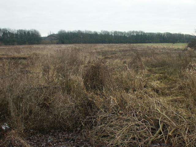 Marshes and bridge, Drayton