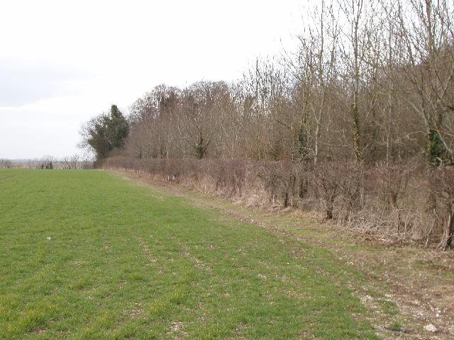 Field and wood, Fisherton de la Mere