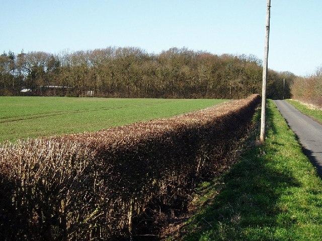 Wynnstay Wood, Leicestershire