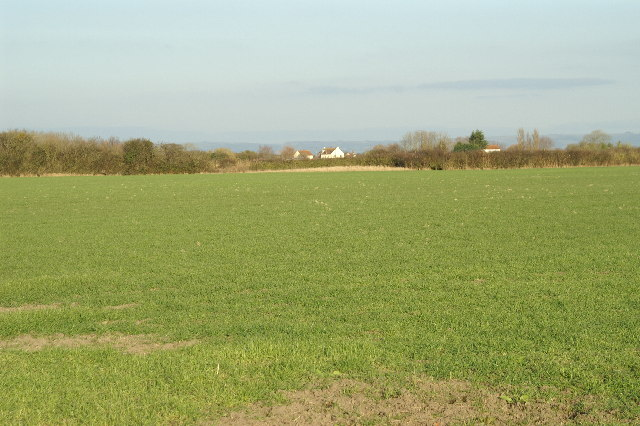 Fields looking to West Huntspill