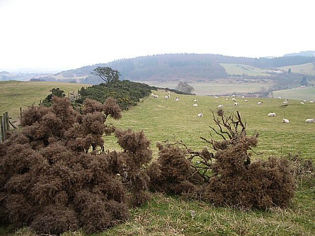 Fields at Pitmedden