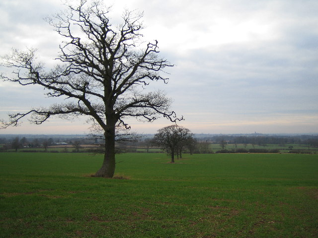 Trees in a field