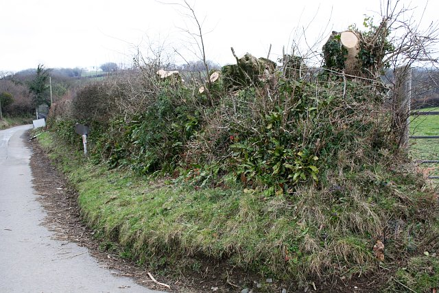 Taming the Hedge