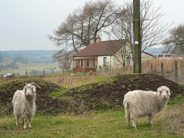 Goats and cottage, Pitmedden
