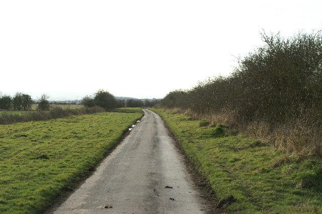 Track on Pawlett Hams