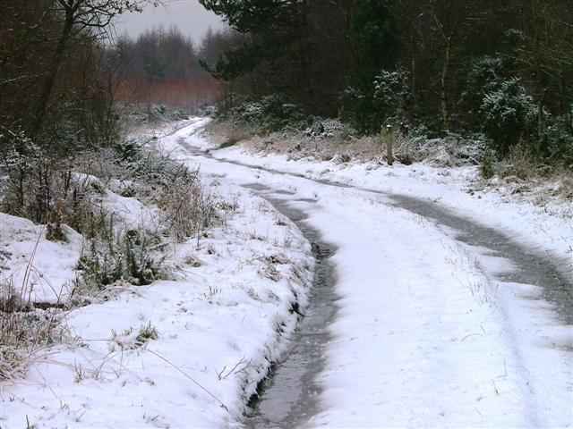 Hutton Mulgrave Wood