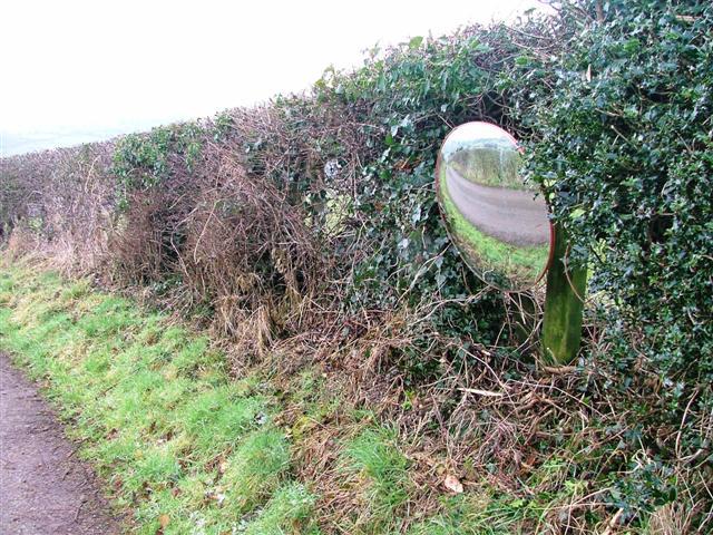 Hedge, Road to Lodge Farm