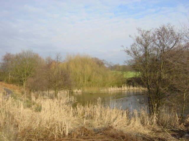 Reedbed at Carr Mill Dam