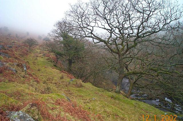 Pile's Copse - Dartmoor