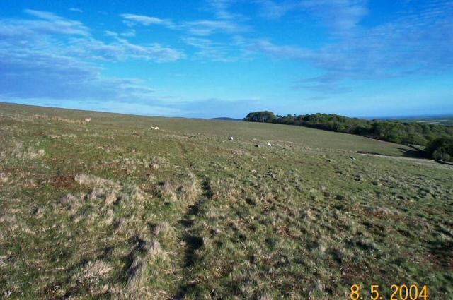 Harrowthorn plantation - Dartmoor