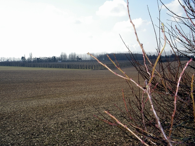 Fields and orchards on the Leckford Estate
