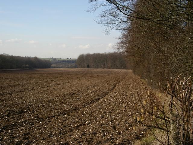 Dumper's Oak and other woodland