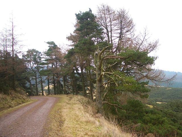 Track through Pitmedden Forest