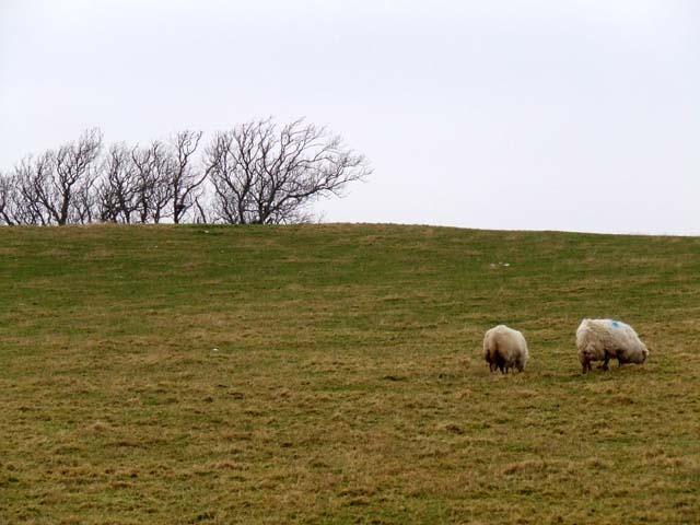 Field near Tai Hirion