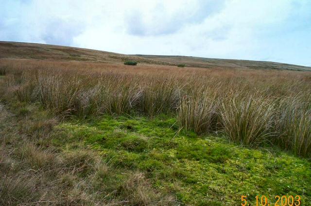 Archerton Bog - Dartmoor