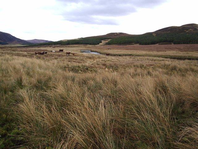 Looking East towards Ledmore