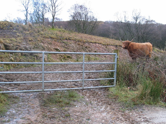 Gate entrance to farm livestock.