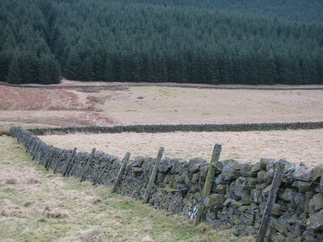 Wall and forest