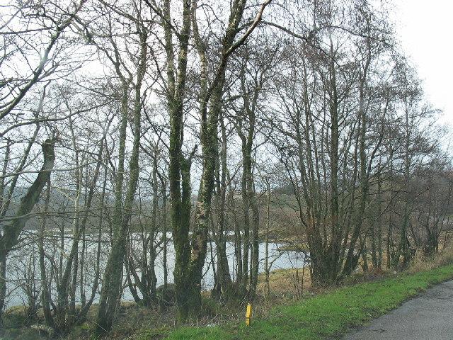 Woodland beside West Loch Tarbert.