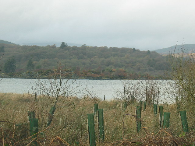 Tree plantation on the shores of West Loch.