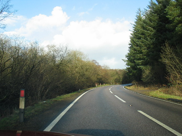 Woodland to the left and right of the A83.