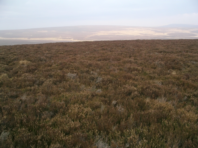 Grouse Moor, Sheil Rigg