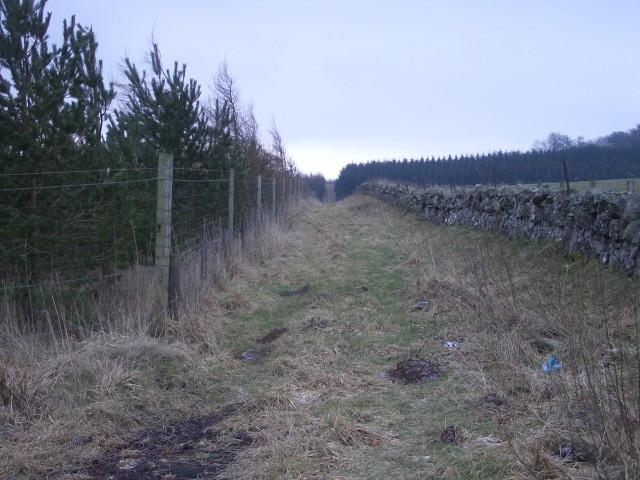 Plantation and wall