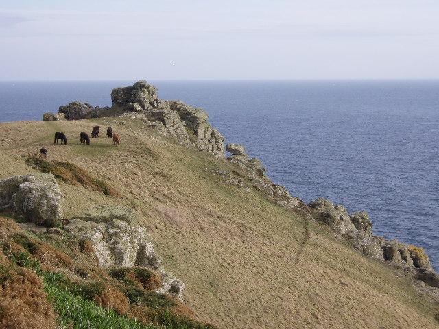 Shetland ponies on Pen Olver