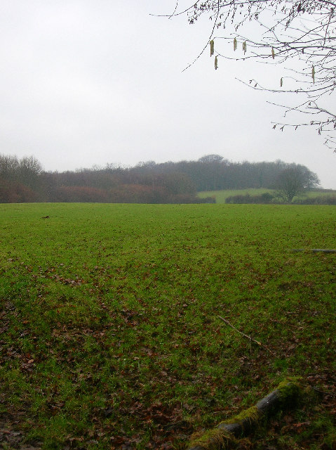 Starvecrow Wood